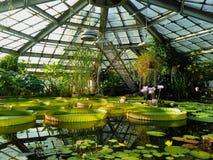 Lotosowa i wodna leluja w stawie wodna szklarnia obrazy royalty free
