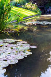 Lotosowa lub Wodna leluja fotografia stock