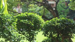 Lotosowa roślina fotografia stock