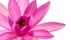 Lotosowego kwiatu abstrakt Zdjęcie Stock