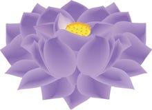Lotosowego kwiatu fiołek Obraz Stock