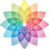 Lotosowego kwiatu koloru koło Zdjęcia Royalty Free
