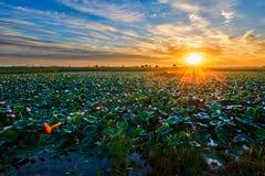 Lotosowego stawu i cloudscape wschód słońca zdjęcia royalty free