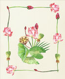 Lotosowi kwiaty szczotkarski węgiel drzewny rysunek rysujący ręki ilustracyjny ilustrator jak spojrzenie robi pastelowi tradycyjn Fotografia Royalty Free