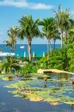 Lotosowi kwiaty w basenie, Hainan Sanya, Chiny Zdjęcia Stock