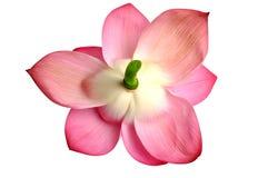 Lotosowy kwiat Obraz Royalty Free