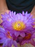 Lotosowy kwiat na ręce z wodnymi kroplami Obraz Royalty Free
