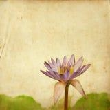 Lotosowy kwiat na starym grunge Fotografia Royalty Free