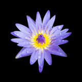 Lotosowy kwiat odizolowywający na czarnym tle Zdjęcia Royalty Free