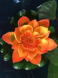Lotosowy kwiat przy Wata Arun świątynią obraz royalty free
