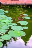 Lotosowy kwiat z liśćmi i purpurowymi lotosowego kwiatu roślinami, wodnej lelui lotosowego kwiatu okwitnięcia na odbiciu woda upr Obraz Stock