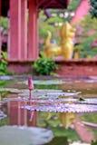Lotosowy kwiat z liśćmi i purpurowymi lotosowego kwiatu roślinami, wodnej lelui lotosowego kwiatu okwitnięcia na odbiciu woda upr Obrazy Stock