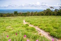 Lotosowy niebiański kwiatu pole w Tajlandia obraz royalty free