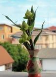 Lotosowych kwiatów bukiet Zdjęcie Royalty Free