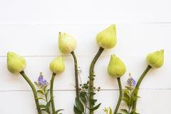 Lotosowych kwiatów lokalna flora Asia przygotowania mieszkania nieatutowy styl obrazy stock