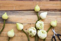 Lotosowych kwiat?w lokalna flora Asia przygotowania mieszkania nieatutowy styl zdjęcie royalty free