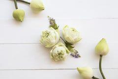 Lotosowych kwiat?w lokalna flora Asia przygotowania mieszkania nieatutowy styl fotografia stock