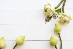 Lotosowych kwiat?w lokalna flora Asia przygotowania mieszkania nieatutowy styl fotografia royalty free