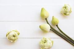 Lotosowych kwiat?w lokalna flora Asia przygotowania mieszkania nieatutowy styl obrazy stock