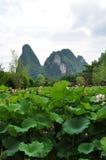 Lotosteich in Guilin Stockfoto