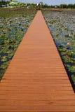 lotosu basen Obrazy Royalty Free