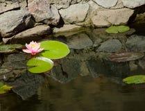 Lotosu kwiat Zdjęcie Royalty Free