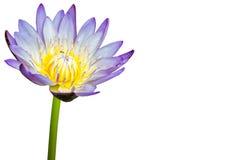 Lotosu kwiat odizolowywający na biały tle Fotografia Stock