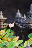 Lotots flower in buddhist temple Stock Image