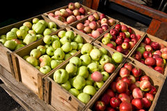 Lots Äpfel Stockbild
