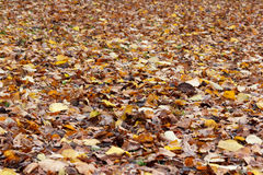 Lots of autumn leaves Royalty Free Stock Photos