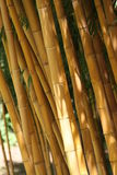 Lots of bamboo stems close together Stock Photo