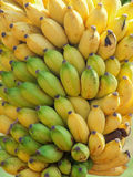Lots of bananas Royalty Free Stock Photos