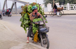 Lots of bananas transported on motorbike Stock Image