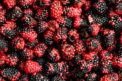 Lots of berries Stock Photos