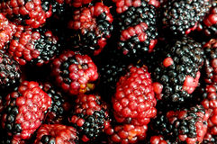 Lots of berries. Arranged at the background Royalty Free Stock Image