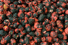 Lots of berries Royalty Free Stock Photo