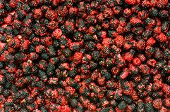 Lots of berries arranged at the background Stock Image