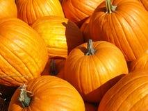 Lots of big pumpkins Stock Photo