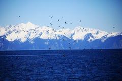 Bird, blue sky, mountain, lake. Lots of Bird flying , blue sky, mountain, lake royalty free stock photography