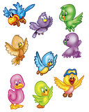 Lots of birds Royalty Free Stock Photography