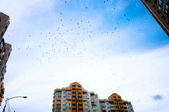 Lots of birds against the sky Royalty Free Stock Images