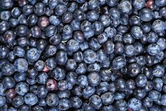 Lots of blueberries Royalty Free Stock Images