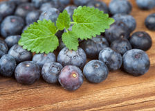 Lots of blueberries with leaves on wood Stock Images