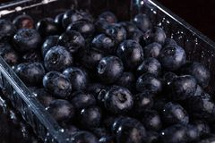 Lots of blueberries stock photos
