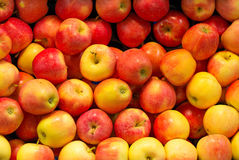 Lots of bright apples. Stock Photography