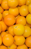 Lots of bright oranges Royalty Free Stock Image