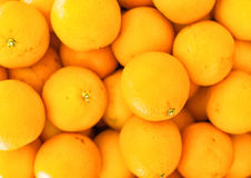 Lots of bright oranges. Royalty Free Stock Image