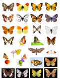 Lots of butterflies Stock Images