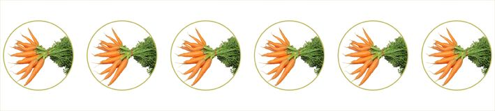 Lots of carrots in bubble. Lots of orange carrots with leaf  in bubble Royalty Free Stock Photo