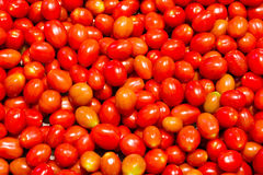 Lots of Cherry tomatoes Stock Photography